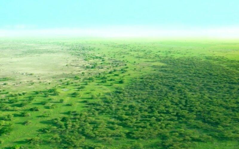 Gran muralla verde de África: ¿Dónde se encuentra?