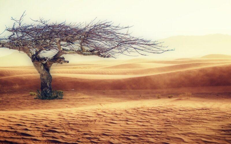 Problemas ecológicos: que aqueja más a nuestro planeta